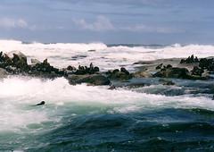 Seals on Duiker Island , South Africa (singingdaisy) Tags: africa south seals autofocus duiker frameit heartawards thelooklevel1red rainbowofnature beautifulearthl1 infinitexposure theredlevel1