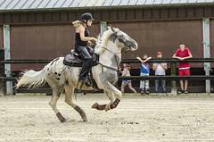 Barrel Racing  Little Creek (NosChevaux.com) Tags: horses horse race cheval barrel quarterhorse chevaux quitation littlecreek barrelracing barrelrace comblainlatour quitationamericaine