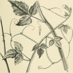 Anglų lietuvių žodynas. Žodis grass vetchling reiškia žolės vetchling lietuviškai.