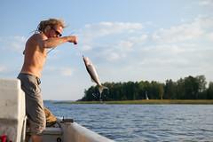 Pikeperch - Sander lucioperca (L.Mikonranta) Tags: fish 35mm canon finland eos fishing f14 14 sigma 5d zander kala jyvskyl dg kuha mkii markii sander 3514 pikeperch pijnne artseries hsm a lucioperca canoneos5dmarkii 5d2 5dii 5dmkii canoneos5dmkii 5dmk2 5dmark2 canoneos5dmark2 sigma35mm14 copyrightlm sigma35mmf14dghsm sigma35mmf14dghsmart sigma35mmf14dghsma