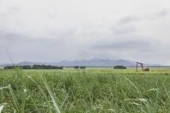 Dominicaanse Republiek (Mark Sekuur) Tags: haiti landbouw dominicaanserepubliek suikerriet caribisch laaltagracia