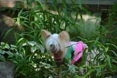 """LuLu In The Tall Grass • <a style=""""font-size:0.8em;"""" href=""""http://www.flickr.com/photos/96196263@N07/14896861541/"""" target=""""_blank"""">View on Flickr</a>"""