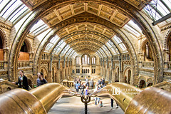 Art in Perspective (david gutierrez [ www.davidgutierrez.co.uk ]) Tags: city uk travel light people urban building london art architecture photography design arte interior perspective arts architectural londres naturalhistorymuseum londra londyn davidgutierrez pentaxk5
