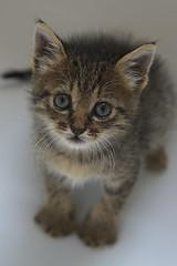Mini (Explore!!!) (AndreaPucci) Tags: home kitten clio mini pisa explore canonef24105mmf4lis canoneos60 andreapucci