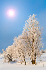 Cold Country Sun (Patti Deters) Tags: wood blue trees winter sky sun white snow cold tree art ice nature vertical rural canon landscape design frozen cool frost day outdoor hoarfrost country scenic bluesky frosty freeze flare interiordesign chill hoar sunflare cafeart pmarie pattidetersphotography