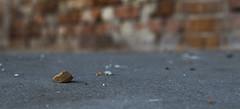 Stein (Moritz Reisinger) Tags: stein beton mauer hrte