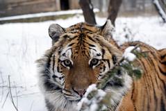 2014-01-29 Snow Aria (159)