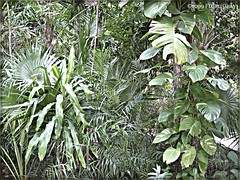 3211084345_72638b0a30_o (gray.florie) Tags: allrightsreserved usewithoutpermissionisillegal ©2009florencetomasulogray florencegray floriegrayflorencetomasulograytomasulofloriegrayfloriegraycom