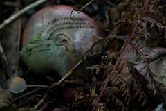 Ragged Blanket (Yoshihiro Kurihara) Tags: mushroom fungi fungus toadstool