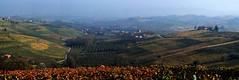 Langhe in autunno (ilsuonodeltempo) Tags: autumn wine alba grapes uva autunno vino vite barolo langhe langa viti dogliani vitigni monchiero