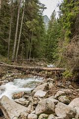 Zakopane_2014_353 (lukasz.konopinski) Tags: dolina tatry zakopane morskieoko giewont staww piciu silkawa
