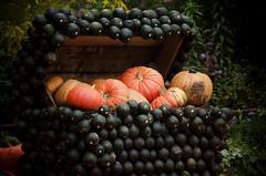 Treasure (Melissa Maples) Tags: sculpture art germany garden deutschland nikon europe pumpkins nikkor baroque vr ludwigsburg afs pumpkinfestival  18200mm f3556g blhendesbarock krbisausstellung  18200mmf3556g d5100