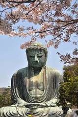 Contemplative (Seeing Visions) Tags: sculpture flower japan bronze blossom buddha kamakura jp cherryblossoms cherrytree 2014 kotokuin kamakuradaibutsu amitabhabuddha amidabutsu rayondfujioka