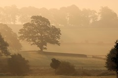 Sunrise and mist, Storiths, Wharfedale, Yorkshire Dales (robin denton) Tags: morning autumn trees mist nature misty sunrise yorkshire autumnal northyorkshire yorkshiredales boltonabbey autumnlight autumnsunlight godsowncounty yorkshiredalesnationalpark storiths sigma18250 canon600d sigma18250mmf3563dcmacrooshsmlens