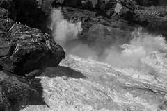 crashing surf, Boar's Head, from Gull Rock, Monhegan, Maine, Nikon D40, nikon nikkor 105mm f-4, 9.22.14 (steve aimone) Tags: sea blackandwhite seascape texture monochrome nikon rocks surf waves head maine monochromatic surface cliffs spray foam bluffs nikkor f4 monhegan boars grays 105mm monheganisland primelens tonality nikond40 nikonprime crashingsurf