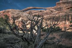 Landscape Arch (Felix Vila) Tags: park usa tree rock landscape arbol utah nationalpark arch desert soutwest archesnationalpark arco wildwest roca landscapearch coloradoplateau