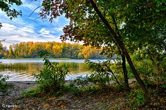 Colors Of Autumn (t-maker) Tags: river dnieper dnipro creek arm bank riverbank island beach ground sand grass weed recreation wave water ripple ripples nature plant green greenery foliage tree trunk stem bole leaf leaves yellow red fallen withered grove copse wood woods forest bush shrub twig branch rush reed cane duckweed sky cloud autumn fall indian summer indiansummer gleam glow sheen glitter luster brilliance brilliancy shine landscape waterscape scenery hdr kyiv kiev ukraine nikon d5100