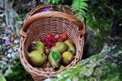 Cueillette automnale (Corinne Lejeune Girot) Tags: poire fraise framboise panier noix pear walnut strawberry raspberry basket automne autumn garden jardin