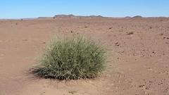 073-Maroc-S17-2014-VALRANDO (valrando) Tags: sud du maroc im sden von marokko massif saghro et dsert sahara erg sahel