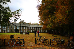 Autumn leaves (Julia L.S) Tags: christspieces cambridge christspiecescambridge parksofcambridge park autumn october autumnleaves otoño octubre hojasdeotoño orangeleaves leaf beautiful beautifulpark bycicles bikes parksofengland england uk landscapes canon50mm18 canon50mm