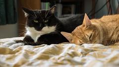 Kitheys (Ennev) Tags: pet pets k3 cat k3ii pentax 2016 pentaxk3ii pentaxsmcda18135mmf3556edalifw cats