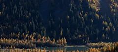 Lac de Derborence (Sven Vietmeier) Tags: automne derborence lärche mélèzes rando schweiz suisse switzerland valais wallis wanderung randonnée lã¤rche mã©lã¨zes randonnã©e
