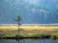Kleiner Arbersee III (schauplatz) Tags: bayerischerwald bayerwald deutschland lamerwinkel urlaub kleinerarbersee landscape seascape lake karsee bavarianforest spruce fichte forest wald tarn cirquelake