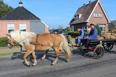 Sacks of potatoes to the market (Davydutchy) Tags: flaeijelfeest flaeijel festival feest dorpsfeest nijhoarne nieuwehorne âldhoarne oudehorne fryslân friesland frisia frise nederland netherlands niederlande paysbas holland country life platteland boer farmer bauer fermier paysan agricultural community hynder horse paard pferd konj hest ĉevalo കുതിര caballo лошадь kůň horsedrawn paardenwagen bespannen wagen wagon cart kar fries friesian frisian