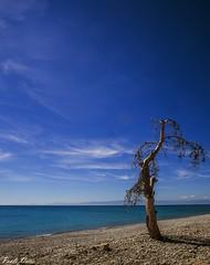 Senza titolo - No title (Pablos55) Tags: albero spiaggia ciottoli mare tree shore sea pebbles blu blue