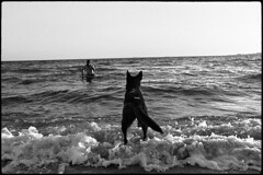 Dogs 07 (Snapshots of Melbourne) Tags: street photography melbourne dogs loyal south beach ian kenins