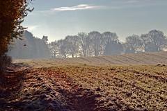 Silver stripe (Wolle550) Tags: wolle550 natur herbst felder landschaft escape