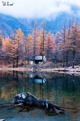 Lago Ferrera, Moncenisio (f.cevrero) Tags: lake lago landscape tree home alps alpi mountains montagne nikon d3200 sunday autumn autunno domenica bosco forest paesaggi allaperto