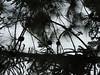 DSCN0331 (apacheizabel) Tags: lago pássaros árvores céu pinhas tronco espelho dágua queroquero rolinhas banco no bosque família de galinhas passeio parque centro aeroespacial da aeronáutica cta são josé dos campos sp