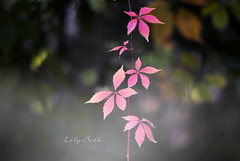 - (-LilyBeth) Tags: autunno autumn nature natura outside colors bokeh dof depthoffield nikon d3000 fall