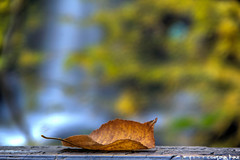 Autumn @ Dry Falls, NC (gusdiaz) Tags: nature autumn fall autumnleaves flickrfriday forest waterfall leaf beautiful hike naturaleza cascada hermoso bokeh canon nc dry falls