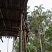 Corowai boy climbing to his family house