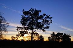 Sonnenuntergang (ingrid eulenfan) Tags: leipzig sonnenuntergang himmel sky baum tree