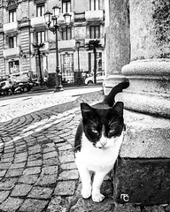 Gattone.   #catania #cat #cats #animals #city #siciliaph #ig_catania #ig_sicilia #ig_italia #scavi #archeology #architecture #nature #italia #italy #siciliabedda #sicilia #sicily #bnw #blackandwhite #canon #canonphoto #canon650d #vision #voglioviverefot (Federica Cervicato) Tags: blackandwhite architecture cats italy city canon canonphoto siciliaph bnw animals catania nature scavi igcatania vision voglioviverefotografando canon650d sicily siciliabedda igsicilia sicilia igitalia italia archeology cat