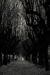 Viale alberato (Elena.D - ph) Tags: people pentax bnw bnwmoment photograpy trees