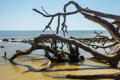 Driftwood Beach (The Suss-Man (Mike)) Tags: atlanticocean beach driftwoodbeach georgia glynncounty jekyllisland ocean sand sonyslta77 sussmanimaging thesussman trees water unitedstates reflection
