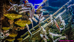 Atlanta, GA Aquarium (nabobswims) Tags: aquarium atlanta ga georgia lightroom midtownatlanta nabob nabobswims sonya6000 unitedstates us