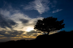 The tree of life (TSE Photography Cornwall) Tags: sunset clouds cornwall colours trees landscape