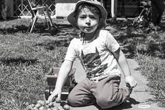 Valentino y el Camión de Frutos Verdes (Alvimann) Tags: valentino baby babyboy toddlerboy toddler niño niños varon hombrecito play juego jugando jugar juegos rostro rostros mirada mirar miradas face faces cara caras camion truck juguete playing fruta fruto fruit fruits green verde verdes inmaduros alvimann