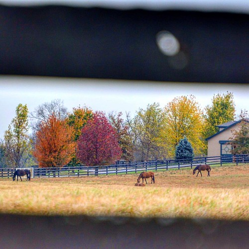 Autumn Grazing #naturephotography #horsefarmcountry #sharethelex #kytourism #fallcolors🍁🍂 #autumn2016🍁 #horses