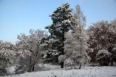 Die Fischbeker Heide im Schnee (iltis-aura) Tags: fischbekerheide fischbekerheideimschnee hamburgssden nikond7000 schneeimnovember wald mksphoto sigma1750mm