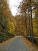 Yedigöller-1 (keynowski) Tags: nature 1240mmf28pro autumn yedigöller olympusmzuikodigitaled1240mmf28pro em1 olympusomdem1 doğa blou turkey türkiye m43turkiye μ43