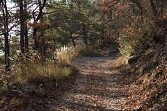 La Sarvaz (bulbocode909) Tags: valais suisse saillon lasarvaz forêts arbres chemins automne nature montagnes vert feuilles