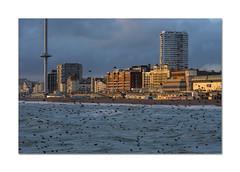 Just add light (Explored) (hehaden) Tags: britishairways i360 tower observationplatform seafront hotels sea starlings evening sunlight brighton sussex