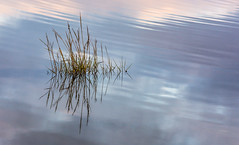 Calm (Peter Quinn1) Tags: creek tide tidalcreek grass grasses reflection reflections calm ripples water textures norfolk holme river