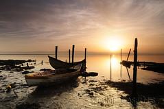 Barcas al amanecer (JAUME CASELLES) Tags: barcas al amanecer ria de aveiro portugal jaume